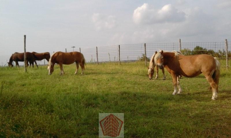 Arena Po (PV) Azienda agricola con zona agriturismo e maneggio Rif. 353